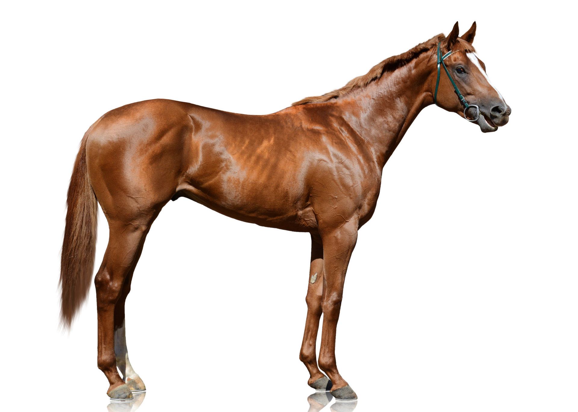What is the best saddle for a thoroughbred?
