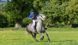 Recognising saddle fit issues horse pain
